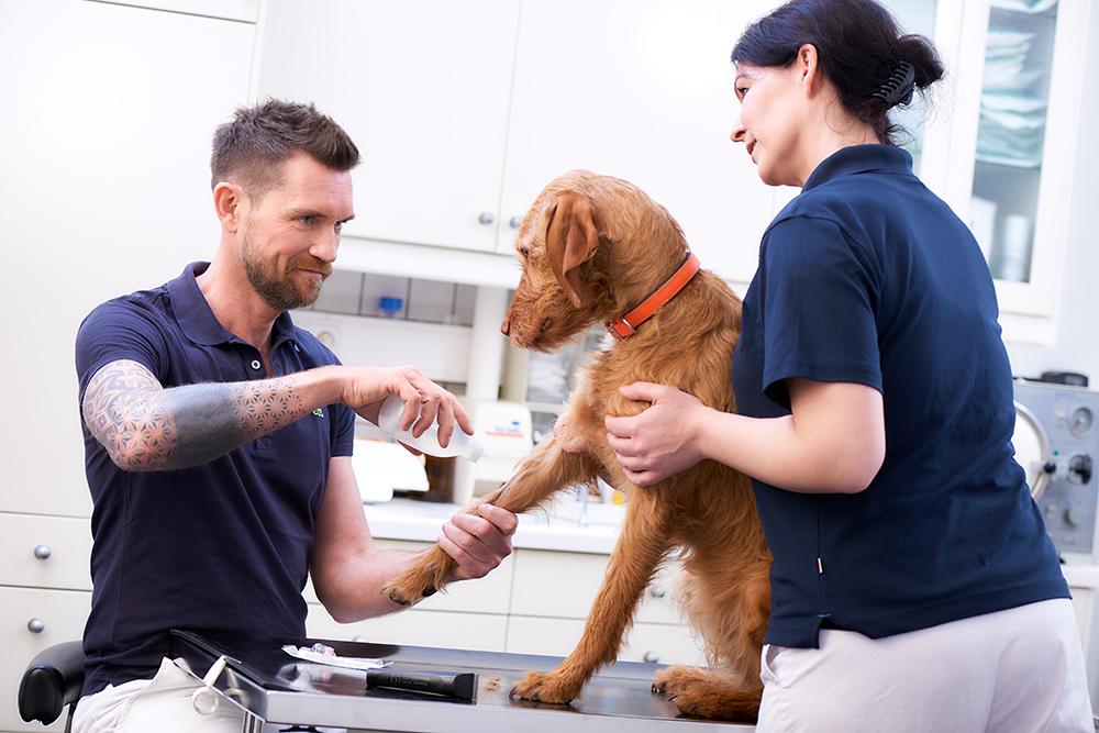 Junger Tierarzt mit Helferin bei der Arbeit / Fotograf Krefeld Neuss / Guntmar Fritz
